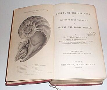 A Manual of the Mollusca; or, a Rudimentary Treatise of Recent and Fossil Shells, Woodward, S P